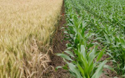 Aziende agroalimentari in continua crescita. Merito dei giovani under 35.